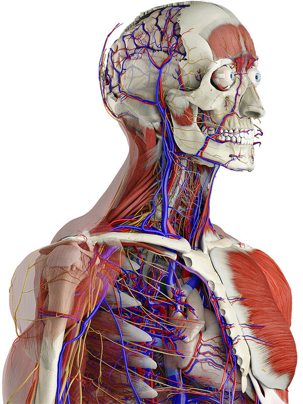 Medical Terminology Courses Online